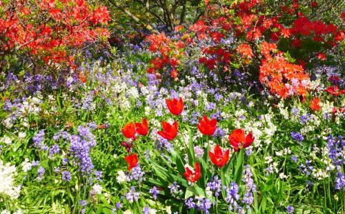 时髦反季游 到南半球的新西兰澳大利亚赏花踏春 哈格里公园