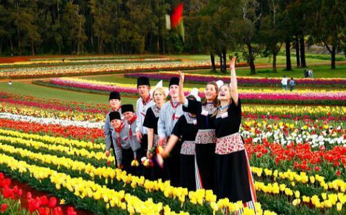 澳大利亚泰斯勒郁金香节最全攻略